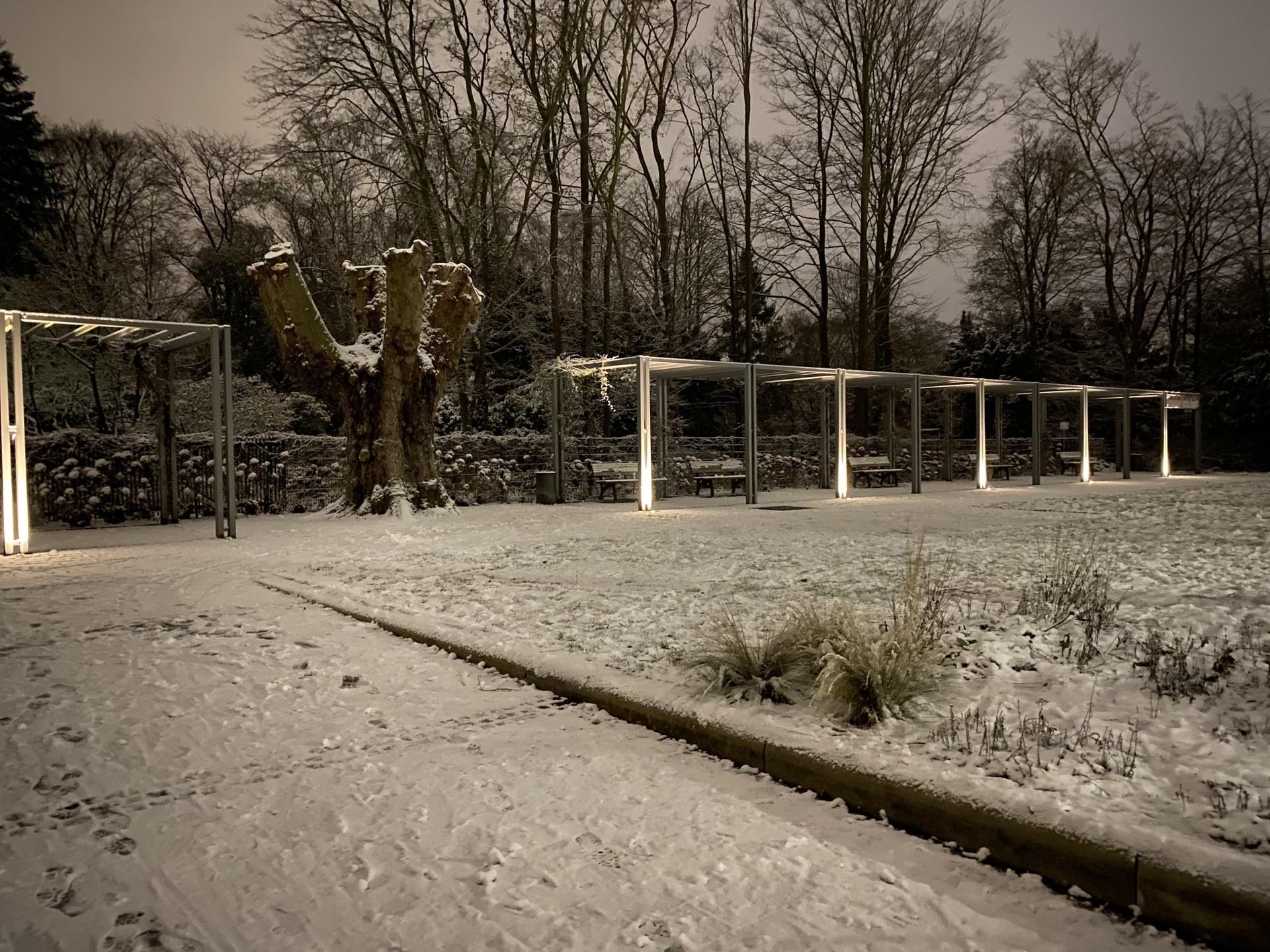 Winter im Botanischen Garten 03.jpg