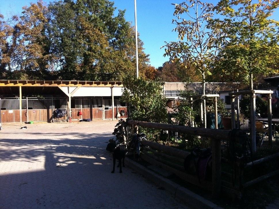 Reiten und Voltigieren im RSV Neuss-Grimlinghausen
