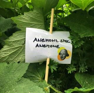 Botanischer Garten im Juni 2021: Anemone